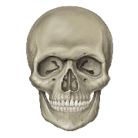 Skull PNG Images | Vector and PSD Files | Free Download.☠️