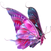 butterfly-png