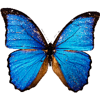 Butterfly PNG Images | Vector and PSD Files | Free Download.🦋