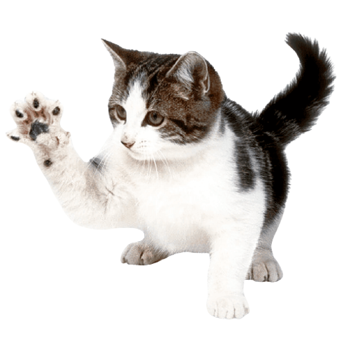 Cat PNG & Vector Stock Images   Free png download.🐈