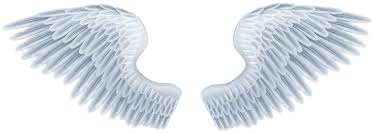 Angel Wings Png | Transparent For Free Download.