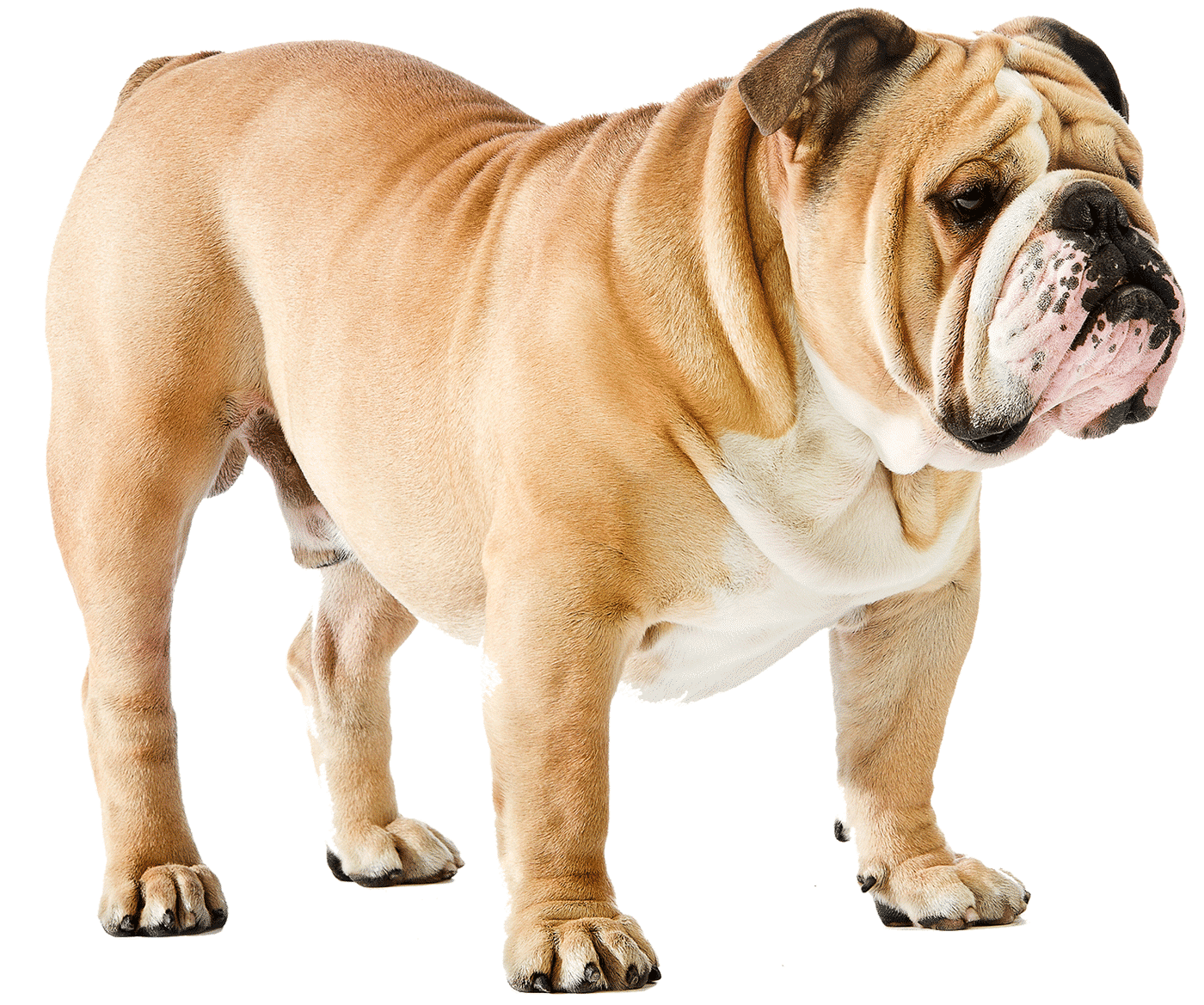 Dog png image | dog's puppy pictures free download🐕