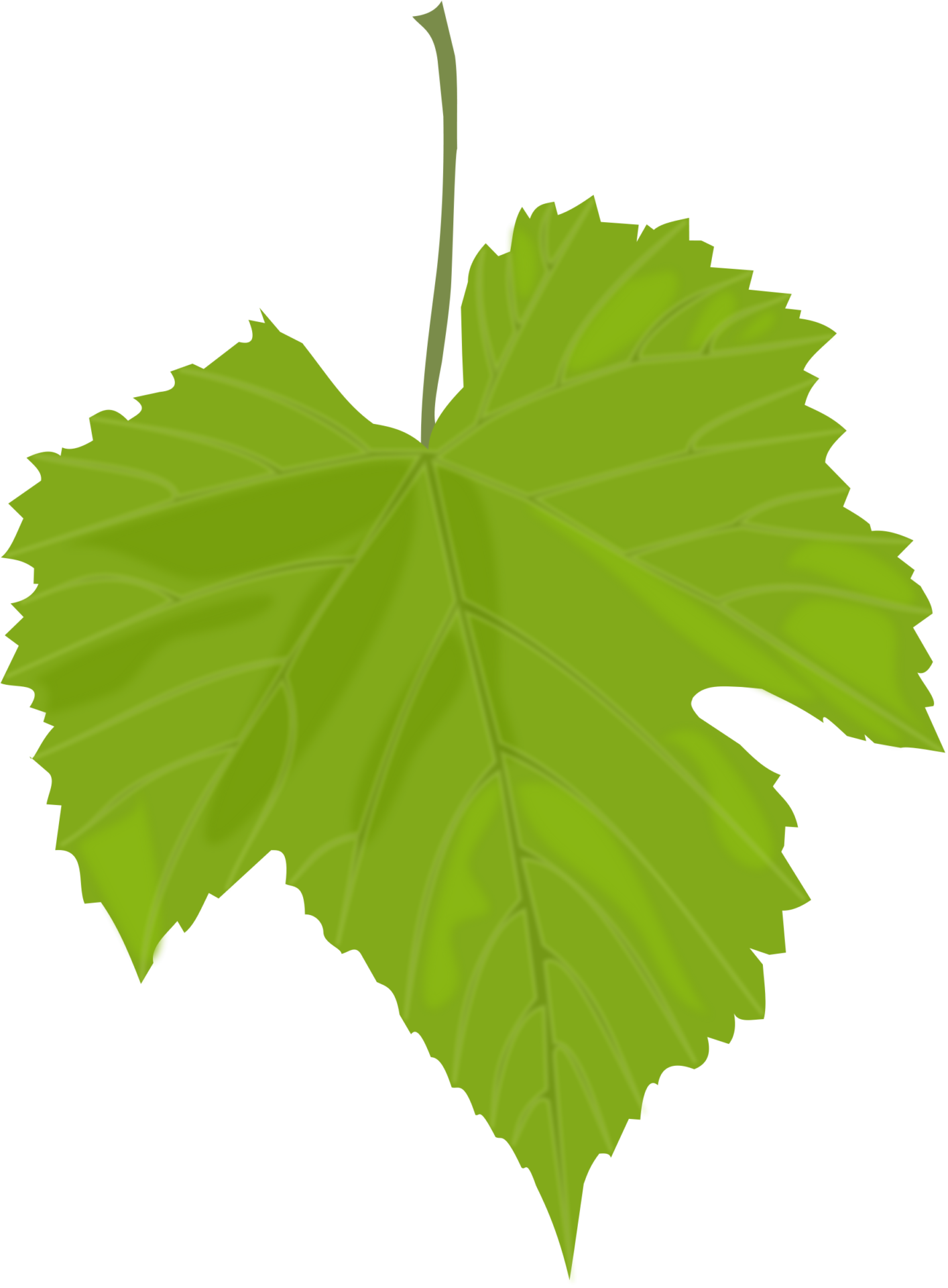 Leaf PNG Images | Vector and PSD Files | Free Download�