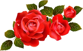 Rose PNG Images🌹   Vector and PSD Files   Rose Png Free🌹